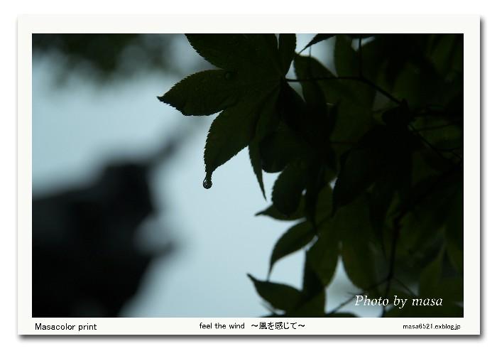 f0063363_136366.jpg