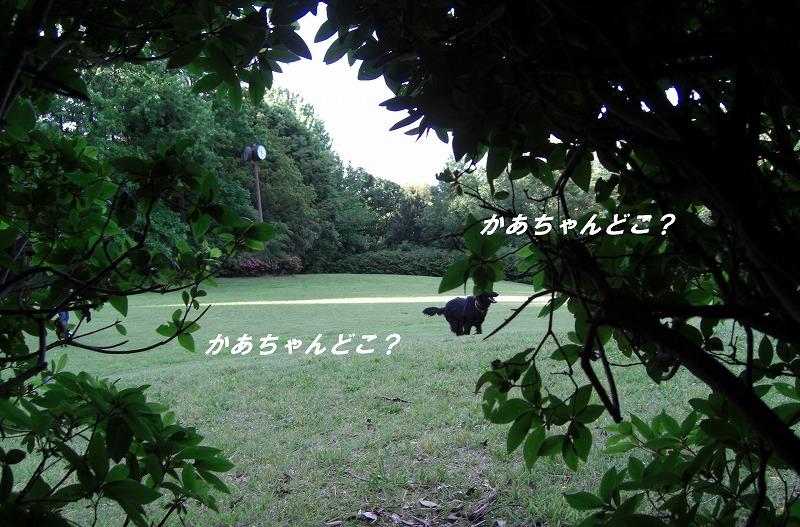 d0116574_2026443.jpg