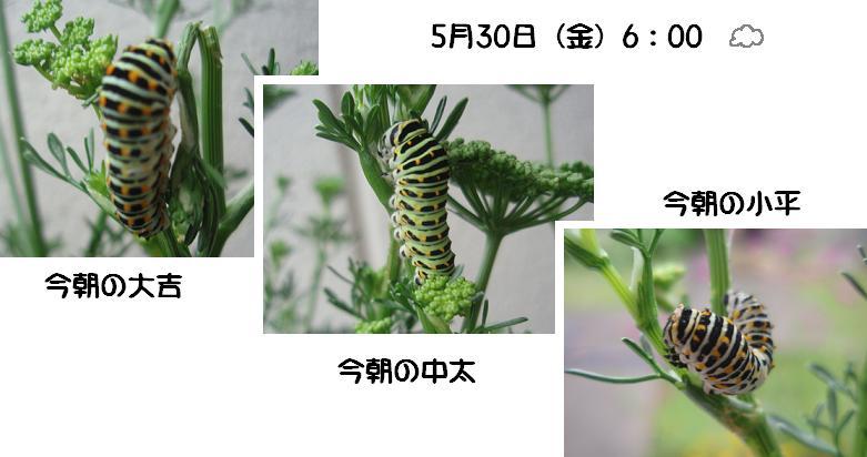 f0101679_6321191.jpg