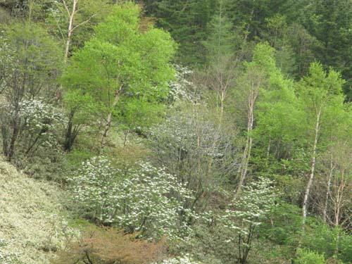 新緑が目に優しい季節_e0120896_1143344.jpg