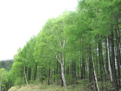 新緑が目に優しい季節_e0120896_11935100.jpg