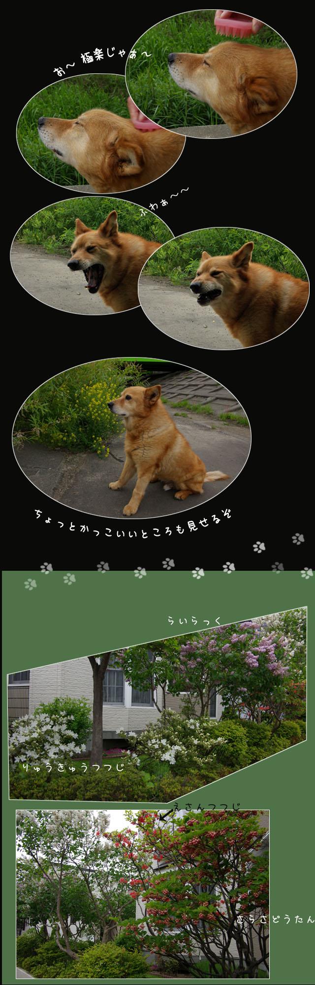 b0019313_15511136.jpg