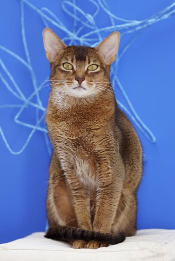 [猫的]青の間_e0090124_8163254.jpg
