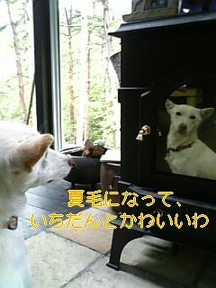 f0148927_1664517.jpg