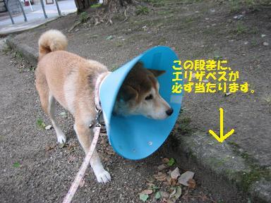 退院しました!_c0049950_20121544.jpg
