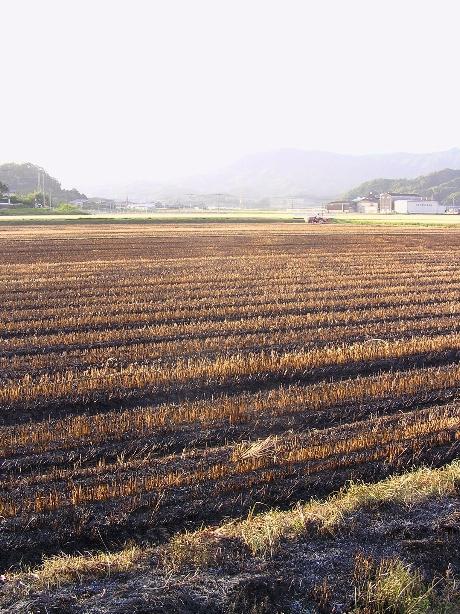 大麦の次は_b0114756_2259949.jpg