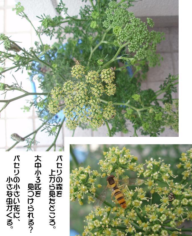 f0101679_199124.jpg