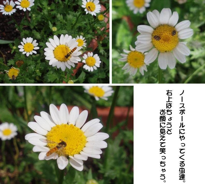 f0101679_1991240.jpg