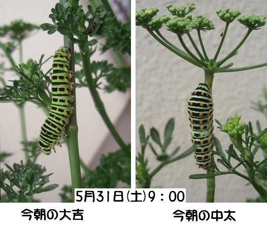 f0101679_9284285.jpg