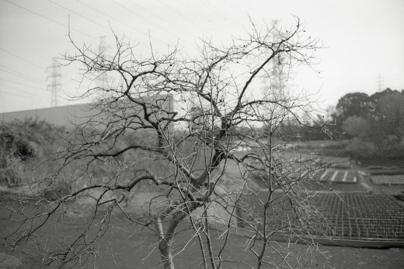 f0167482_1946192.jpg