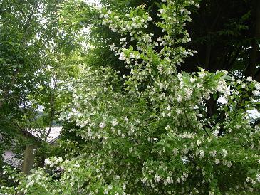 リラの花の咲く頃_d0087595_1037136.jpg