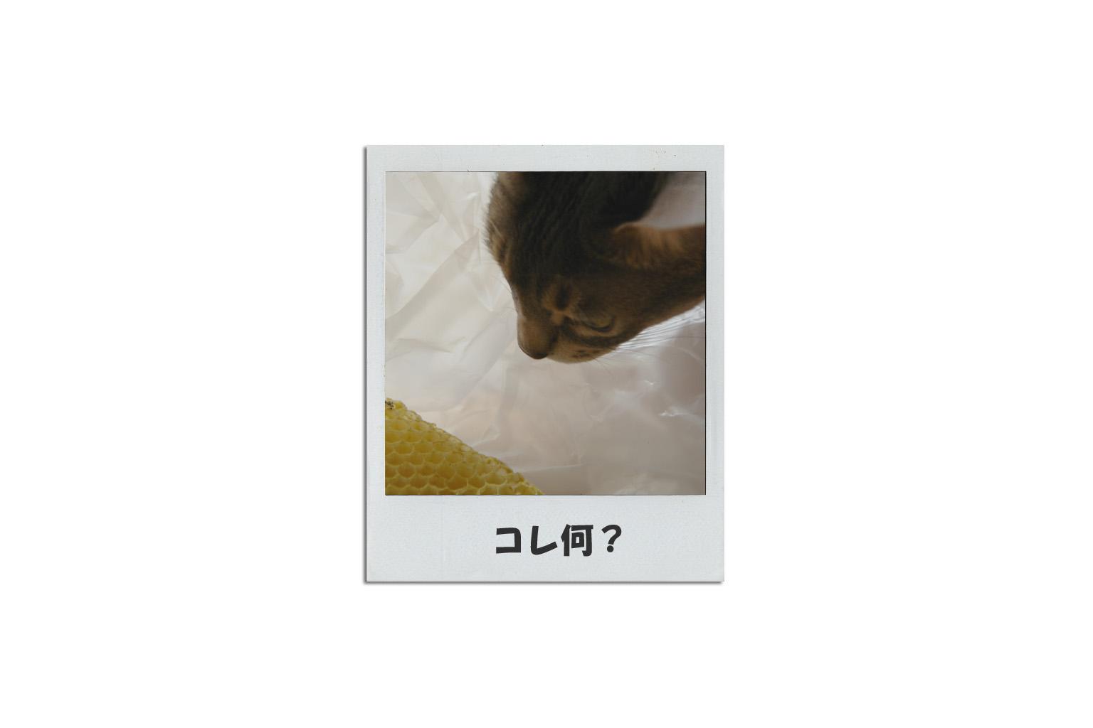 f0113207_17402658.jpg