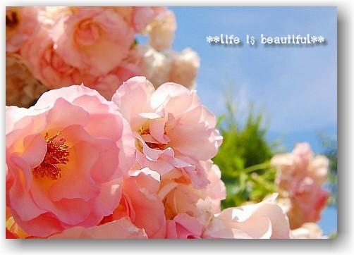 fine morning_d0083623_20355350.jpg