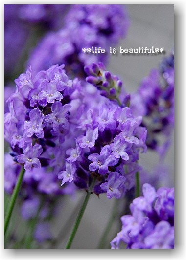 fine morning_d0083623_2046663.jpg