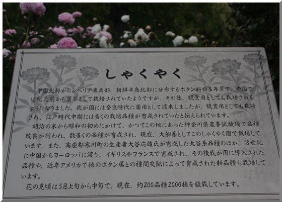 芍薬の園_d0123528_1761336.jpg