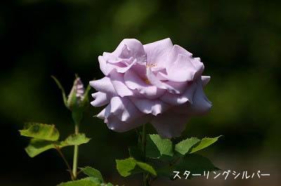 b0078137_003425.jpg