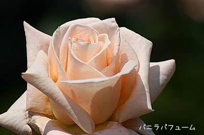 b0078137_022879.jpg
