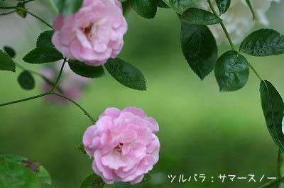 b0078137_05218.jpg