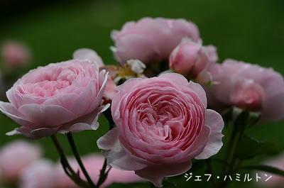 b0078137_052772.jpg