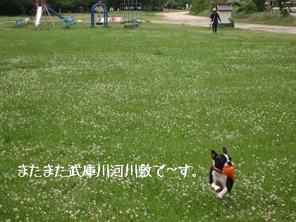 おっ!サンと虎鉄_e0126046_2283034.jpg