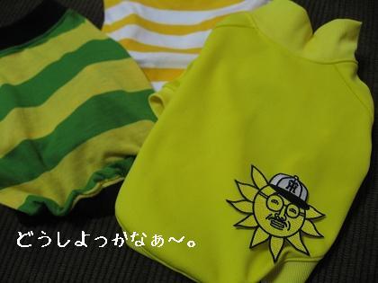 おっ!サンと虎鉄_e0126046_2314541.jpg