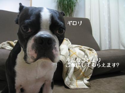 おっ!サンと虎鉄_e0126046_23184577.jpg