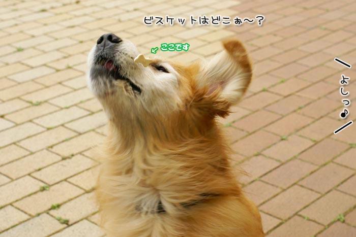 f0142061_1203064.jpg