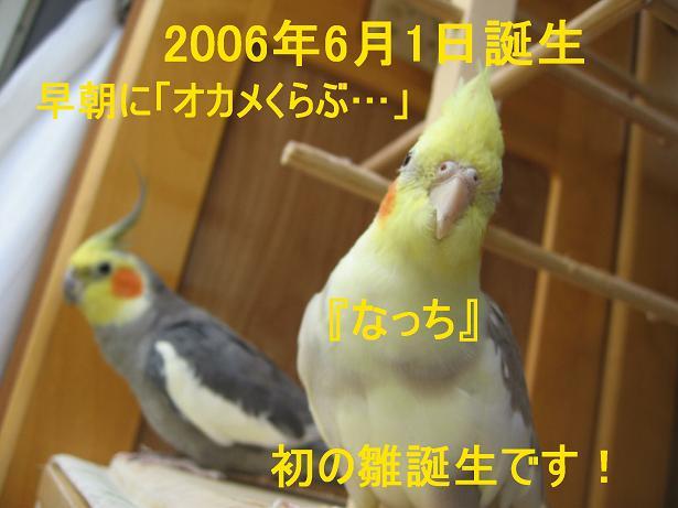 e0027078_1030366.jpg