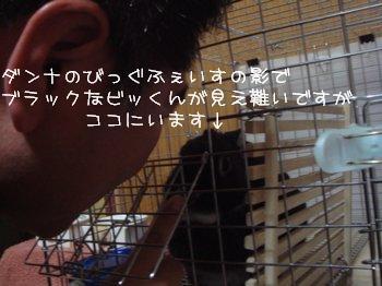 b0081503_14595570.jpg