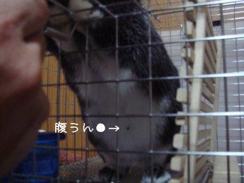 b0081503_150367.jpg