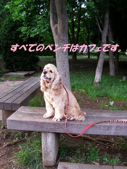 b0067012_1037330.jpg