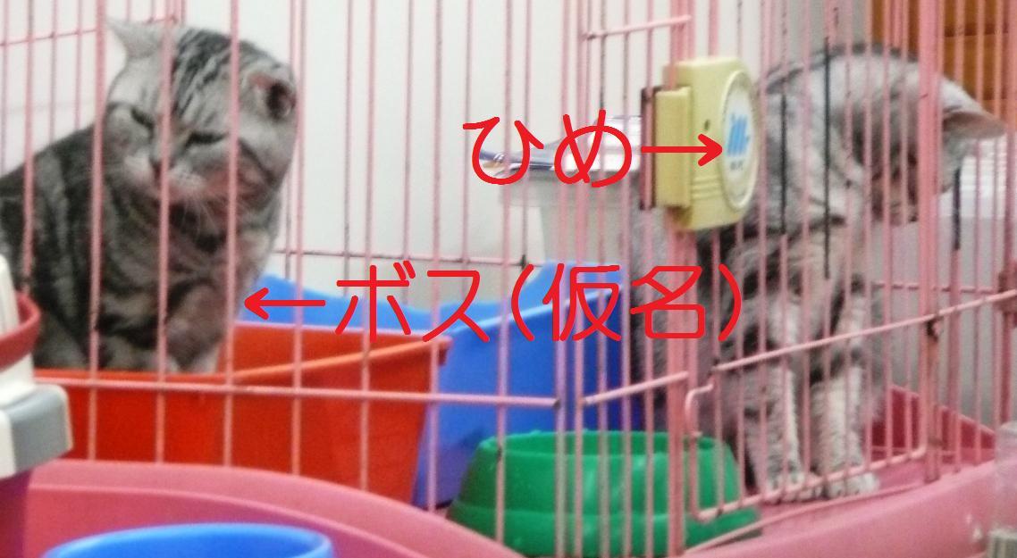 b0071413_1452415.jpg
