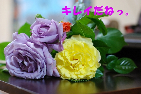 c0116921_231660.jpg