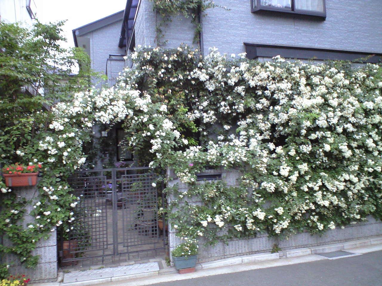 バラの庭へ_e0070939_22552113.jpg