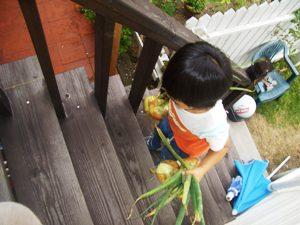 たまねぎ収穫(^。^)_f0009169_7504970.jpg