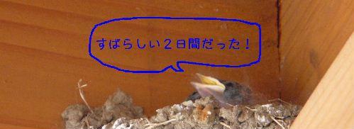 b0053472_171163.jpg