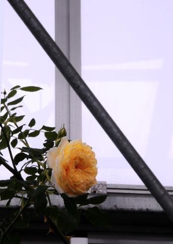 窓。_b0133890_14312562.jpg