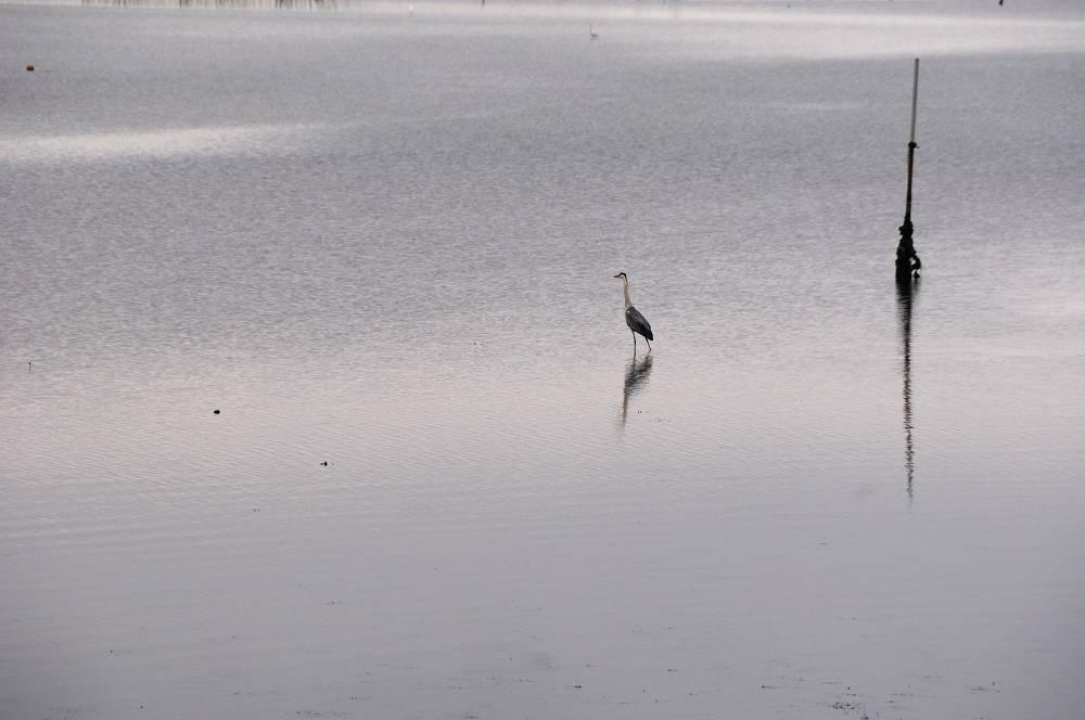 鳥の海_b0074098_713568.jpg