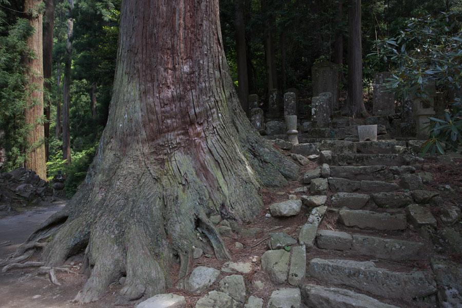 新緑の室生寺(4)_b0043304_0152468.jpg