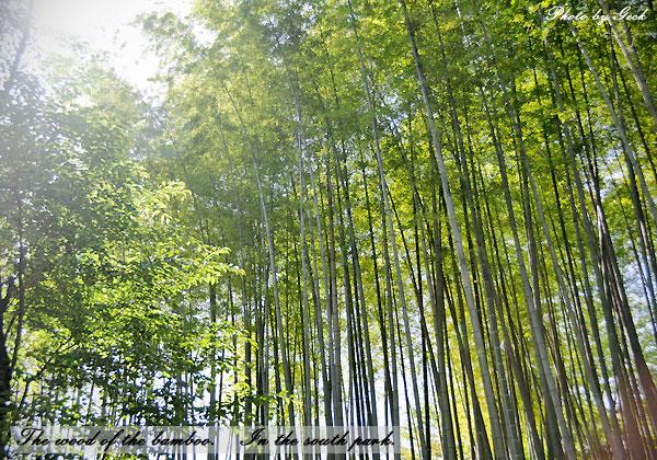 まぶしい朝陽に しなう竹の林に魅撮れ ~★_d0147591_2238759.jpg