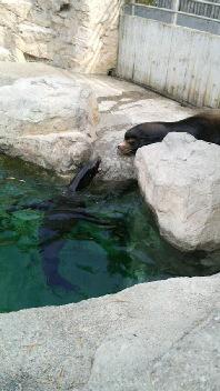 動物園_a0059209_23289100.jpg
