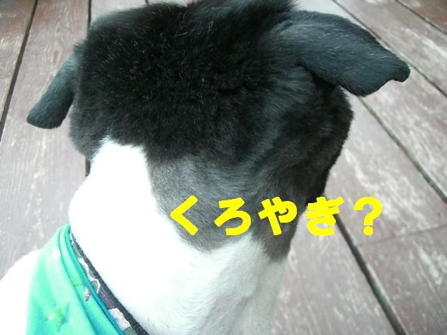 b0137913_042952.jpg