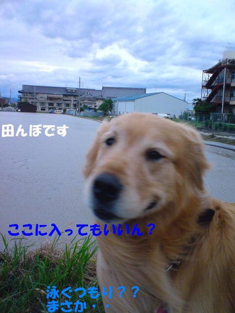 b0127531_22584150.jpg