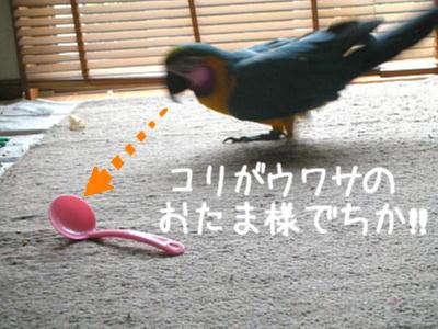 f0132055_832996.jpg