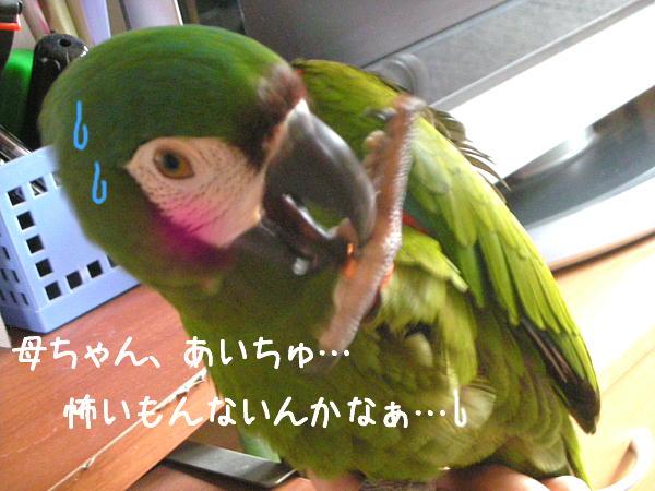 f0132055_8472716.jpg