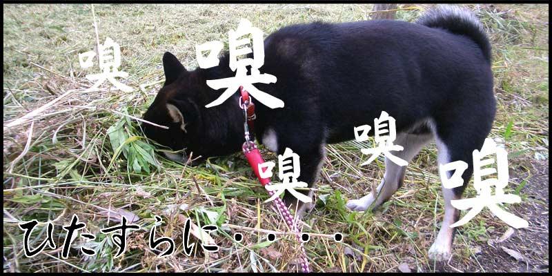 クンクン・・・クンクンクン・・・_f0119369_1104391.jpg