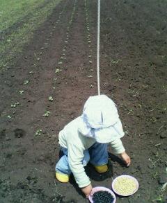豆を蒔く_b0127777_2363686.jpg