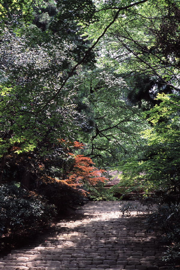 新緑の室生寺(7) × Leica_b0043304_23355862.jpg
