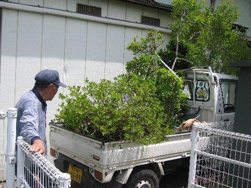 庭木の移植・内装クロス・設備取付他_c0152234_20293217.jpg