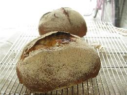 アプリコットのパンと石挽き粉のパン_f0007061_9215342.jpg